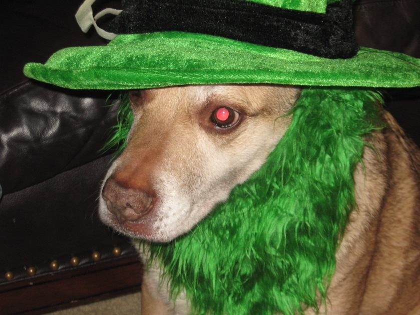 Our Doggie, Andie, On St. Patty's Day. She wasn't amused. Lol :)